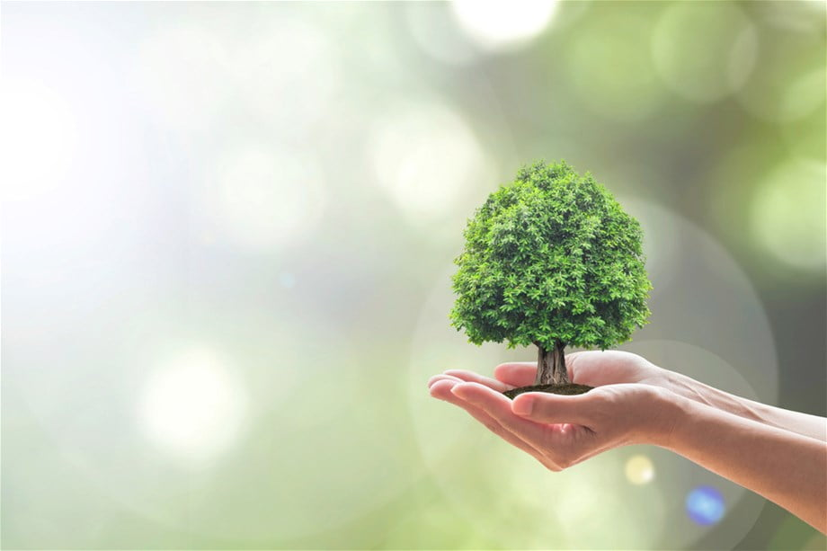 Decreasing our Footprint on the Environment